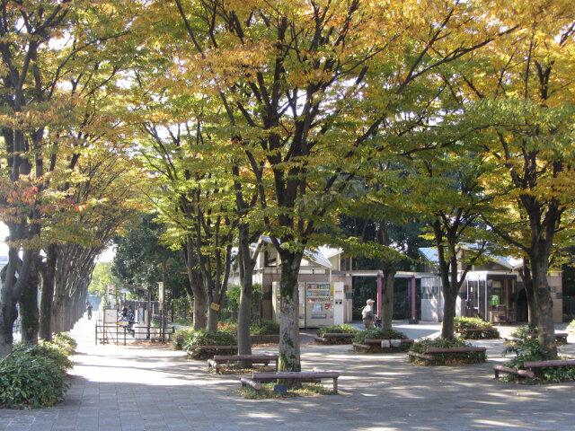 京都梅小路公園.大宮入口紅楓葉