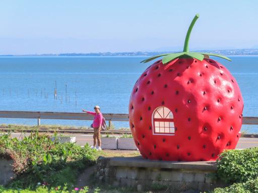 井崎  蜜瓜、草莓 水果巴士站