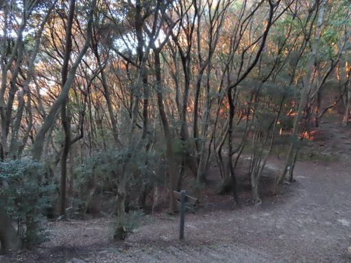 諫早市 上山公園 往山頂展望台步道