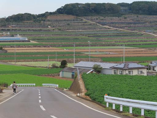 南串山棚畑