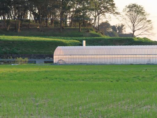 南島原市 南有馬的農田