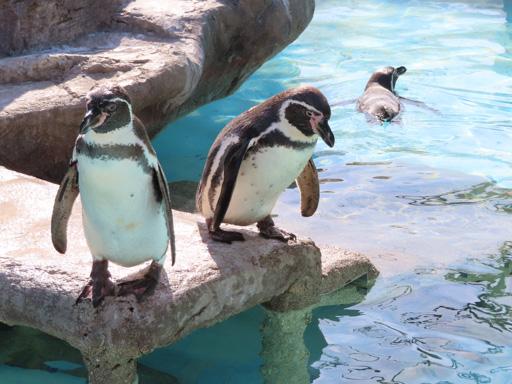 熊本市動植物園 動物園區