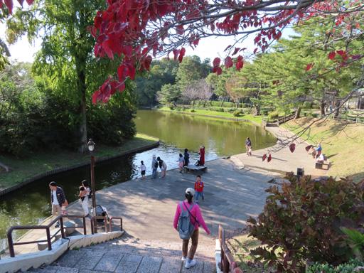 熊本市動植物園 よし池