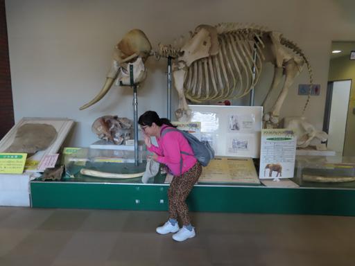熊本市動植物園‧動物資料館