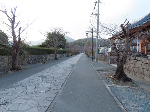 熊本市‧本妙寺‧參拜道路