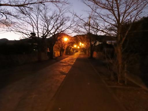 熊本市‧本妙寺夜色