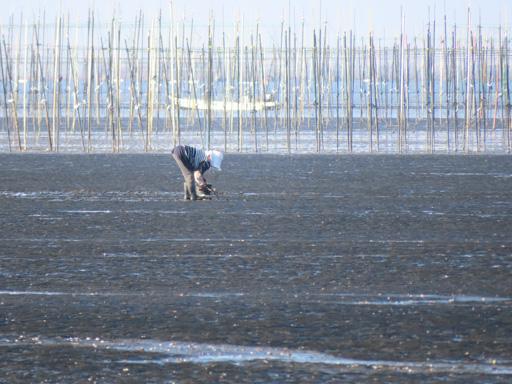 長部田海床路 沙灘檢拾貝殼