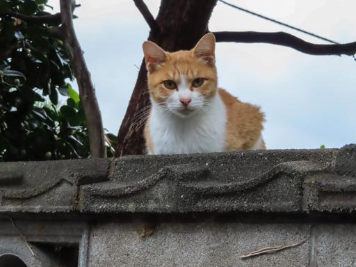 長崎市山區貓咪