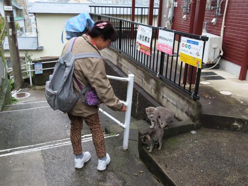 長崎市山區‧西坂町貓咪
