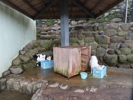 長崎公園 動物園