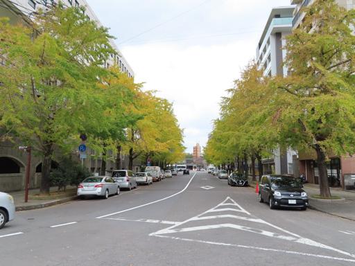 長崎市‧櫻町通り 銀杏大道