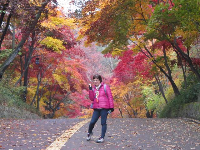 首爾南山公園紅葉