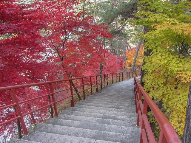 救仁寺漂亮紅葉步道