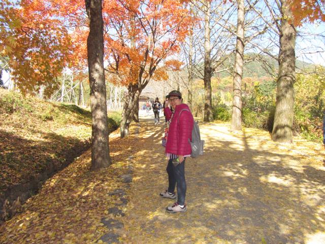 榮州 浮石寺入口 銀杏步道