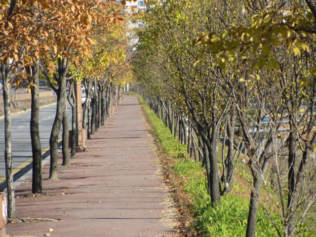 韓國榮州 西川 (서천)右岸河堤