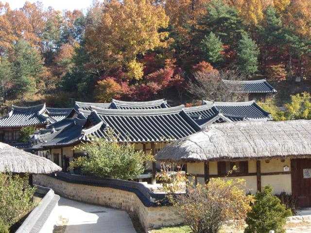 韓國榮州 水島村 (무섬마을 Yeongju Museom Village) 秋天紅葉景色