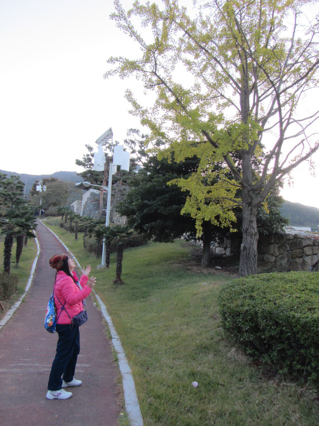 korea-southern-6476