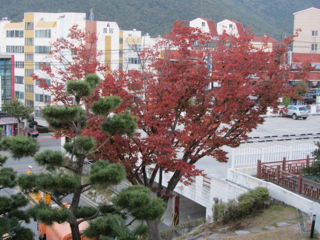 korea-southern-6497