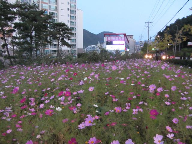korea-southern-6506