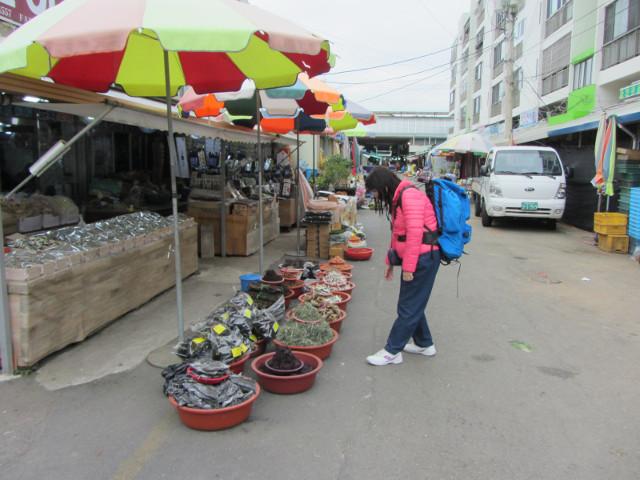 korea-southern-6594