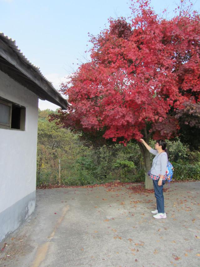 korea-southern-8277