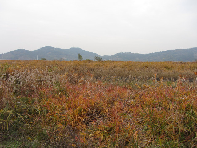 korea-southern-8739