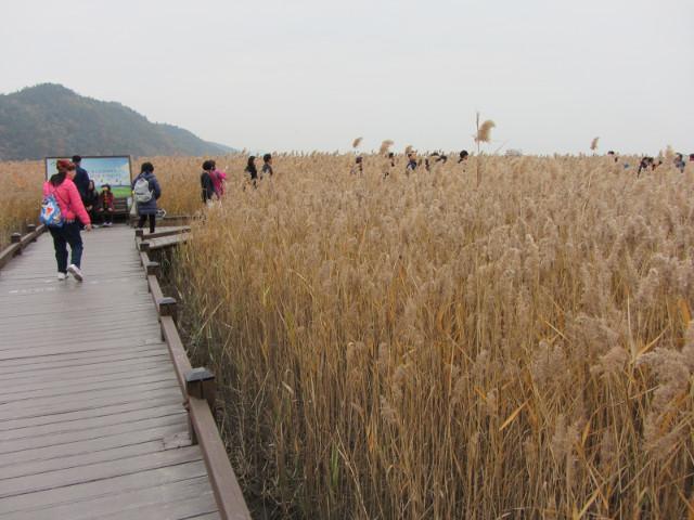 korea-southern-8782