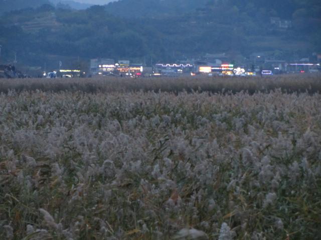korea-southern-8873