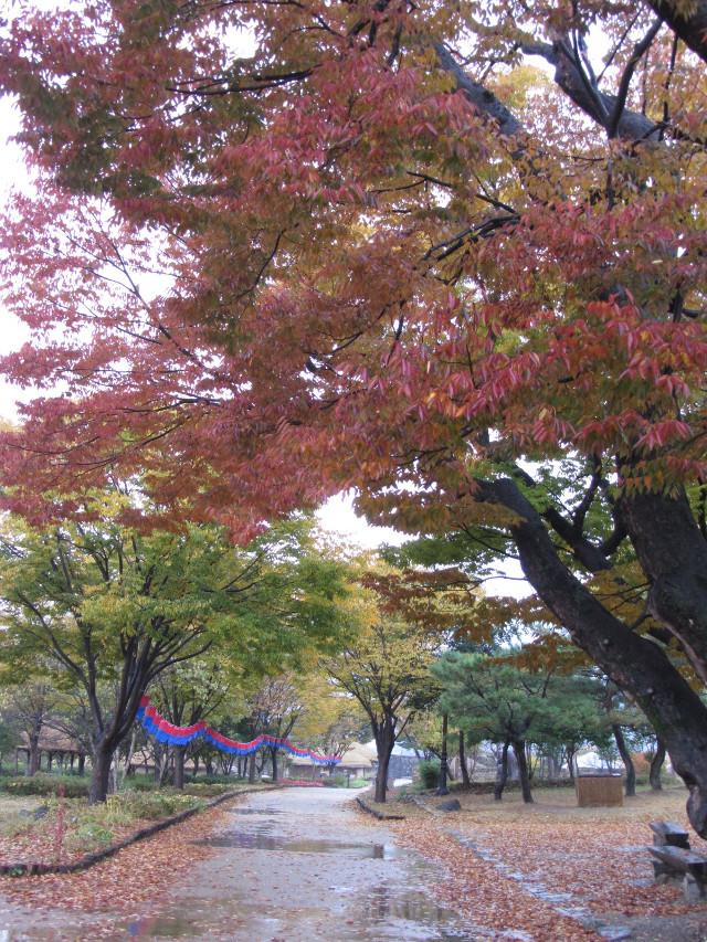 korea-southern-8925