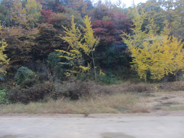 korea-southern-9190
