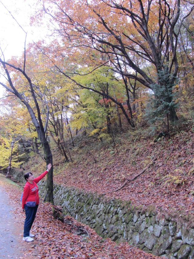 korea-southern-9216