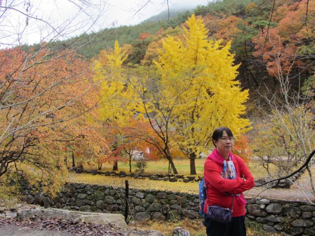 korea-southern-9242