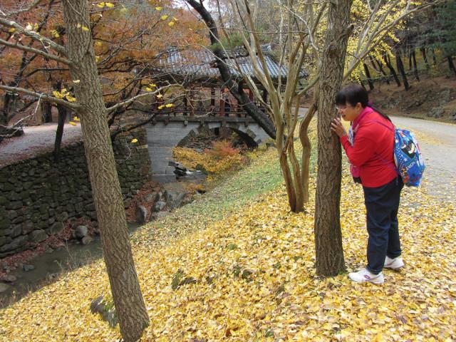 korea-southern-9251