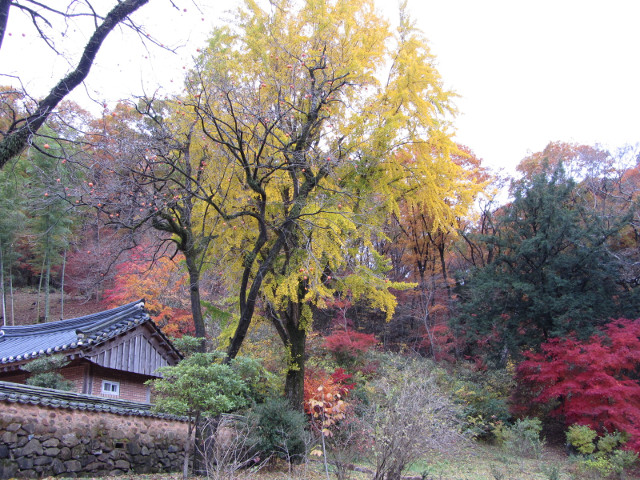 korea-southern-9319
