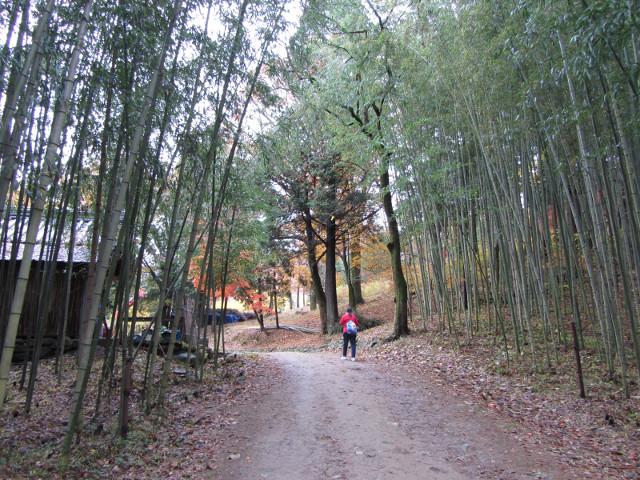 korea-southern-9331