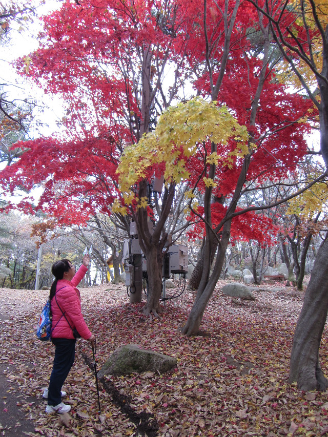 korea-southern-0334