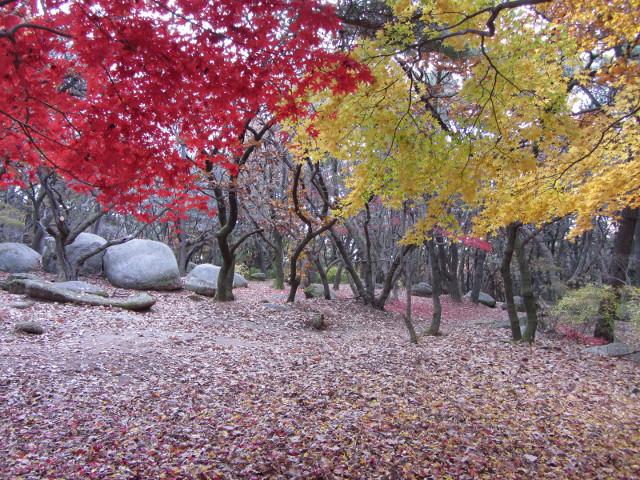 korea-southern-0337
