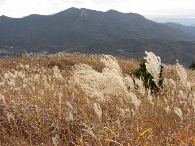 korea-southern-0569