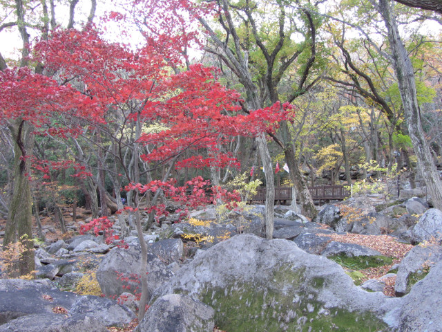 korea-southern-0764