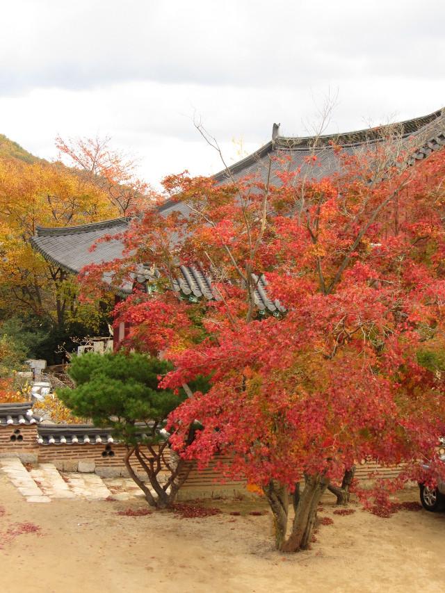 korea-southern-0811