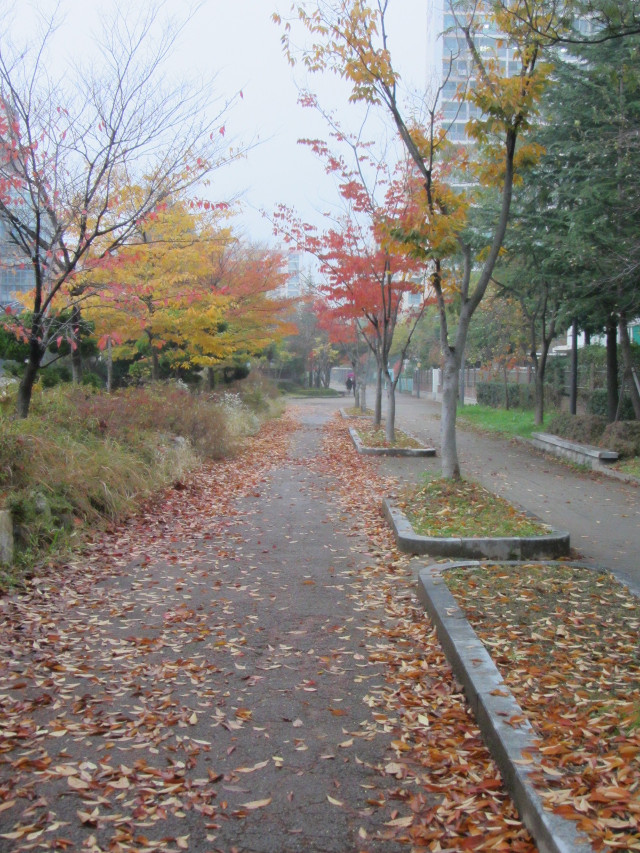 korea-southern-9654