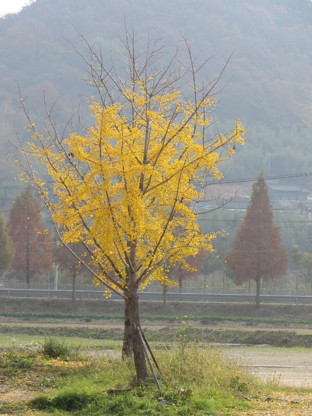 korea-southern-9740