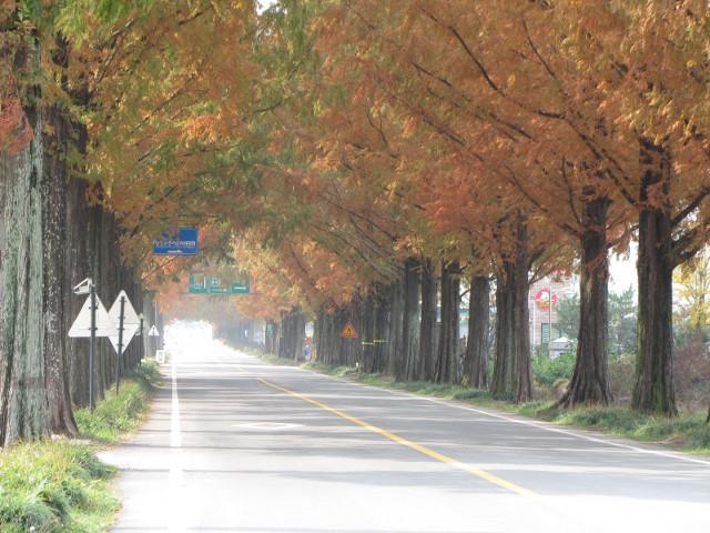 korea-southern-9742