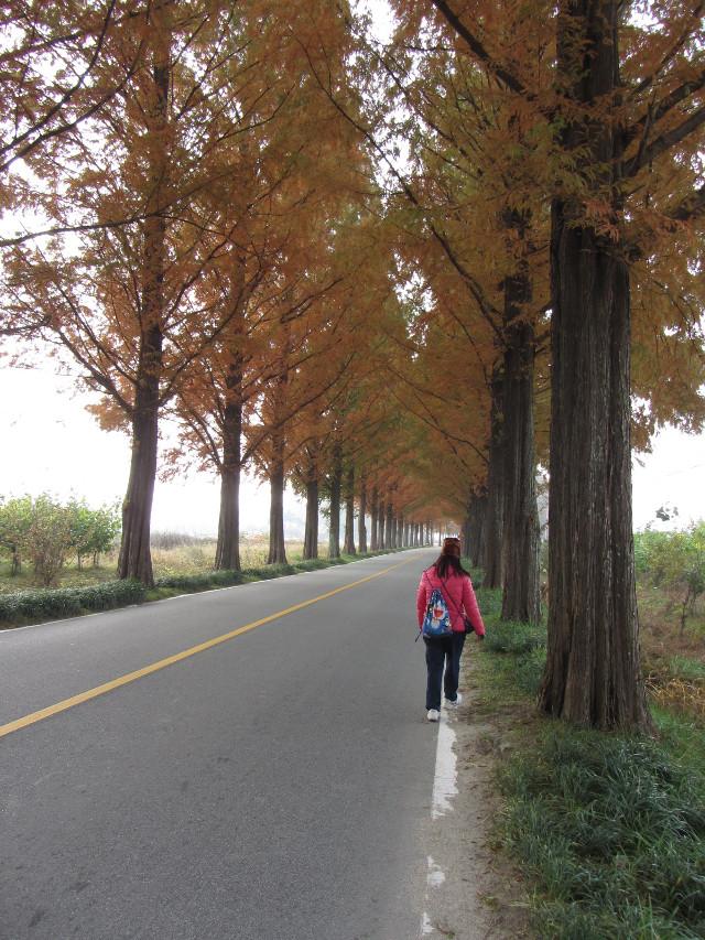 korea-southern-9875