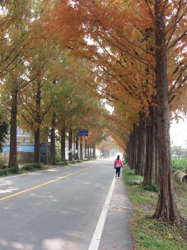korea-southern-9882