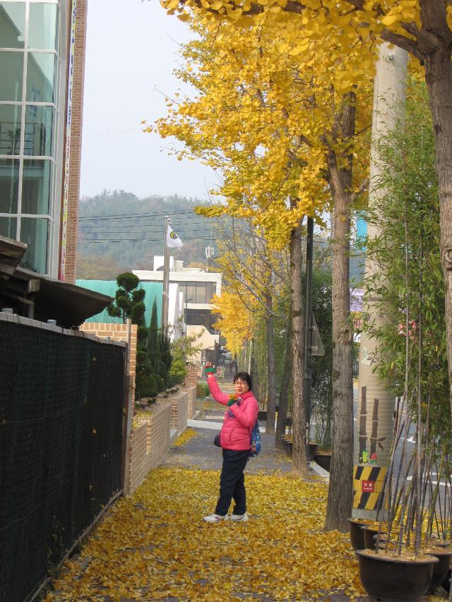korea-southern-9948