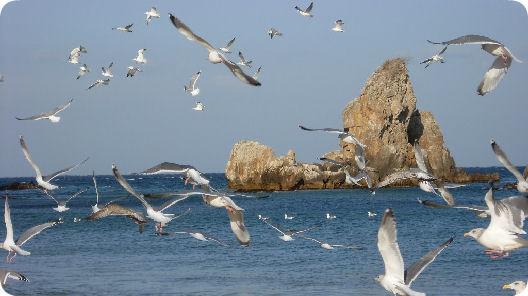 韓國江原道湫岩 - 漫天海鷗飛翔