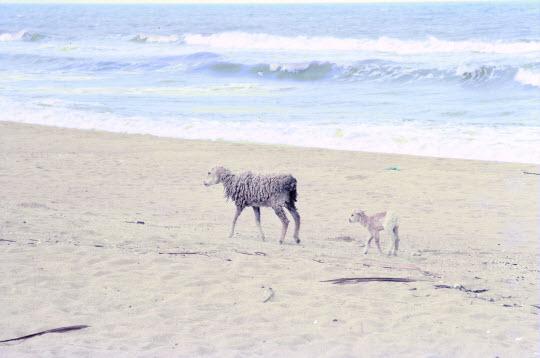 馬來西亞東岸 Kota Bharu Pantai Cinta Berahi 沙灘