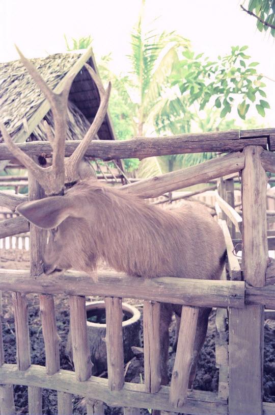 泰國曼谷蛇園