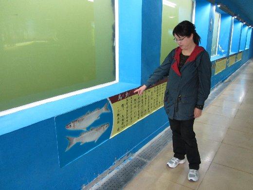 台南安億橋河底景觀步道